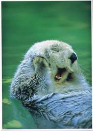 Nom : loutre blanche.jpg Affichages : 398 Taille : 8,1 Ko