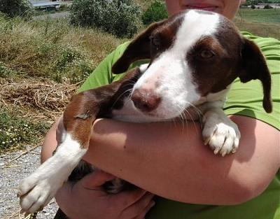 Maya adorable petite chienne attend sa famille au refuge (Grenade, Espagne)-a_5121369352483.jpg