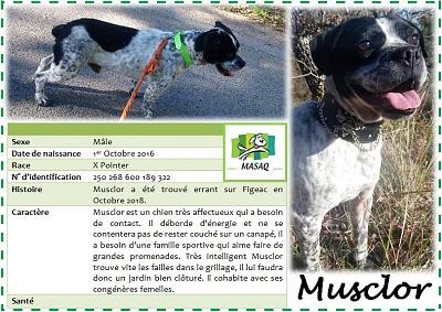 Musclor, chien mâle x pointer, né en 2016, à l'adoption dans le 46 (MASAQ)-musclor.jpg
