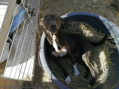 MYRTILLE - TOUCHANTE CHIENNE NEE EN 2011 - 15 KG - REFUGE ALINA-30531465_2092968120940621_3329986038376956_n.jpg