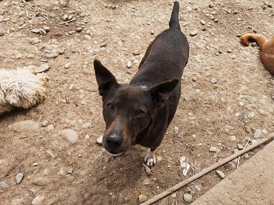 MYRTILLE - TOUCHANTE CHIENNE NEE EN 2011 - 15 KG - REFUGE ALINA-60095686_393108191543517_762300993609138176_n.jpg