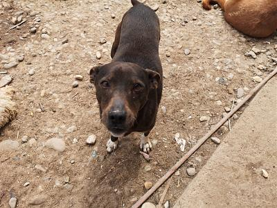 MYRTILLE - TOUCHANTE CHIENNE NEE EN 2011 - 15 KG - REFUGE ALINA-60107591_303564117211820_8824096818863276032_n.jpg