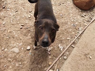 MYRTILLE - TOUCHANTE CHIENNE NEE EN 2011 - 15 KG - REFUGE ALINA-60387488_2890155461002197_655743293082042368_n.jpg