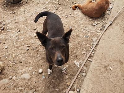 MYRTILLE - TOUCHANTE CHIENNE NEE EN 2011 - 15 KG - REFUGE ALINA-60694192_440616926749016_7560529041086742528_n.jpg