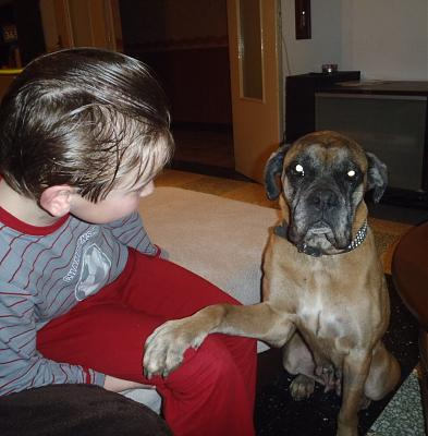 Nala adorable boxer née en 2003 au refuge SPA de Morée(41)-p2140003-copie.jpg