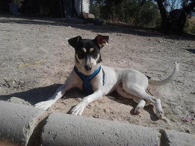 Nube adorable petite louloute 8 mois attend au refuge (Grenade, Espagne)-a_5991380580462.jpg