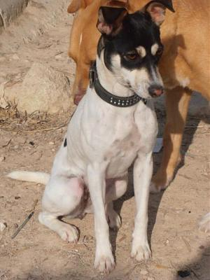 Nube adorable petite louloute 8 mois attend au refuge (Grenade, Espagne)-a_5991385386001.jpg