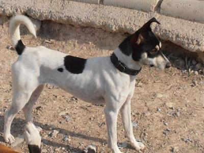 Nube adorable petite louloute 8 mois attend au refuge (Grenade, Espagne)-a_5991385386004.jpg