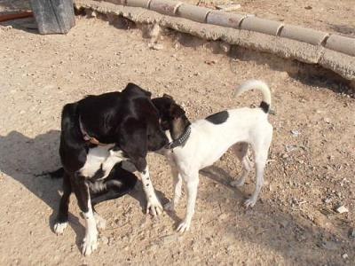 Nube adorable petite louloute 8 mois attend au refuge (Grenade, Espagne)-a_5991385386033.jpg