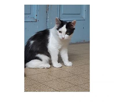 OULEY - Adorable chaton affectueux !-3.jpg