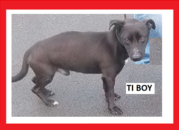Nom : TI BOY.PNG