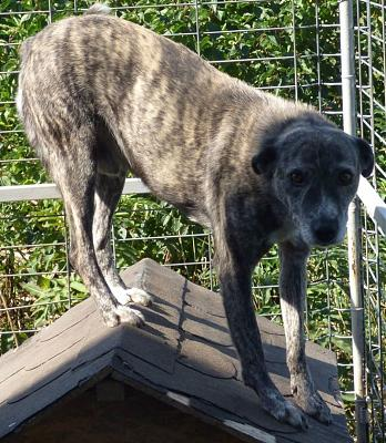 PIXEL MALE CROISE TAILLE MOYENNE(ROUMANIE) ADOPTE-pixel10.jpg
