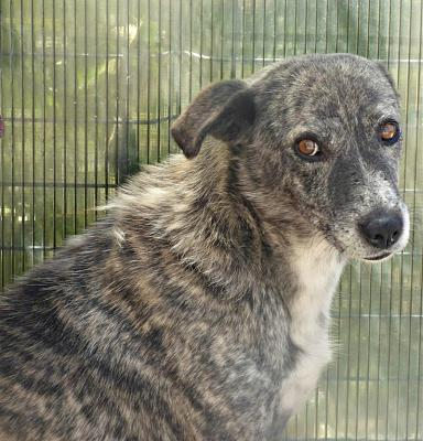 PIXEL MALE CROISE TAILLE MOYENNE(ROUMANIE) ADOPTE-pixel110.jpg