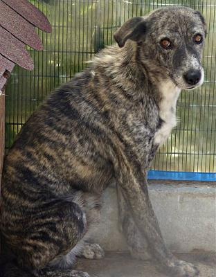 PIXEL MALE CROISE TAILLE MOYENNE(ROUMANIE) ADOPTE-pixel210.jpg