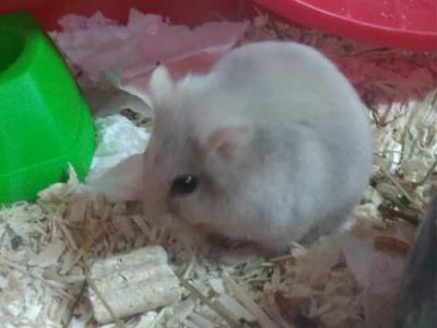 Plouf, hamster nain, 49, covoiturage possible-59422667_593446674485173_3811496202017439744_n.jpg