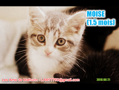 **A RESERVER** MOUSSE & MOISE (1.5 mois)-moise-2.png