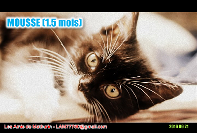 **A RESERVER** MOUSSE & MOISE (1.5 mois)-mousse-1.png