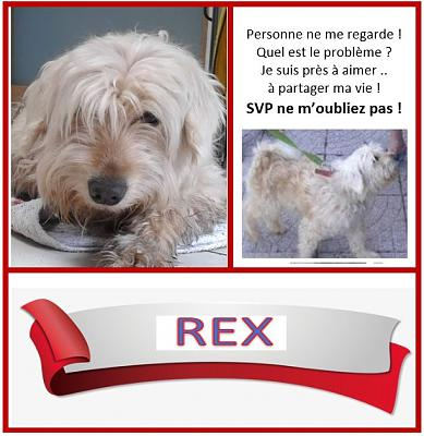 REX croisé caniche/griffon adoption 59 (nles photos)-captureffiche.jpg