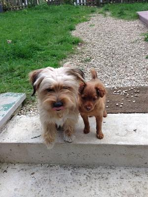 Roucky, petite louloute de 4 mois à adopter-rox-rouky-rox-rouky1-img.jpg