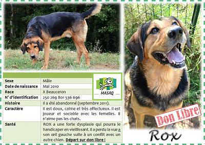 Rox à l'adoption don libre (46)-13900176_1752771891668876_2673822999749910742_n.jpg