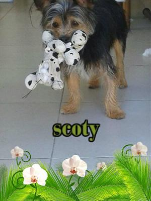 Scoty-M-2ans type york non lof(ltt2c)-scoty.jpg