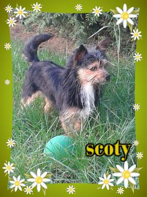 Scoty-M-2ans type york non lof(ltt2c)-scoty1.jpg