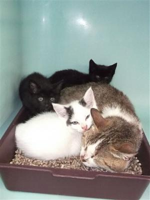 SEM 25 : SOS FOURRIERES RP 35 chats chatons  // AVT LE  21 06 .14-18550-bb.jpg
