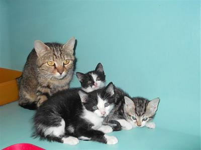 SEM 25 : SOS FOURRIERES RP 35 chats chatons  // AVT LE  21 06 .14-22047-bb.jpg