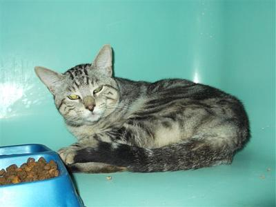 SEM 25 : SOS FOURRIERES RP 35 chats chatons  // AVT LE  21 06 .14-22287.jpg