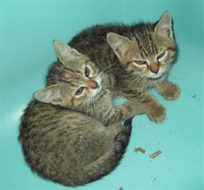 SEM 25 : SOS FOURRIERES RP 35 chats chatons  // AVT LE  21 06 .14-22359.22361.jpg