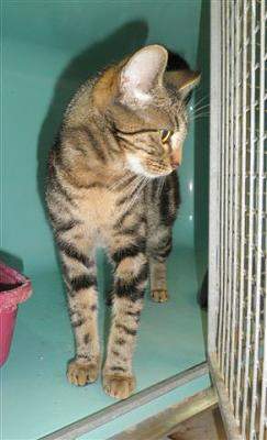 SEM 27 : SOS FOURRIERES RP 55 chats chatons // AVT LE 05.07.14-22403.jpg