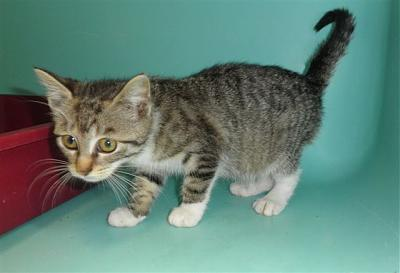 SEM 27 : SOS FOURRIERES RP 55 chats chatons // AVT LE 05.07.14-22503.jpg