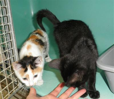 SEM 27 : SOS FOURRIERES RP 55 chats chatons // AVT LE 05.07.14-22504.22505.jpg