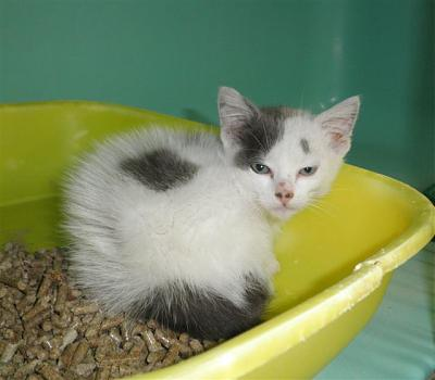SEM 27 : SOS FOURRIERES RP 55 chats chatons // AVT LE 05.07.14-22555.jpg