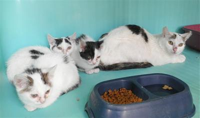 SEM 27 : SOS FOURRIERES RP 55 chats chatons // AVT LE 05.07.14-22603-bb.jpg