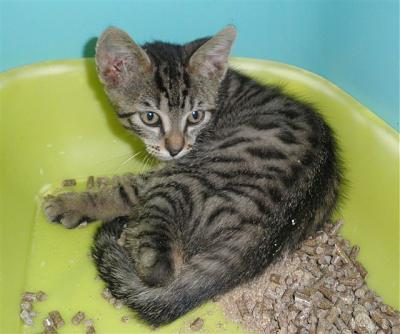 SEM 27 : SOS FOURRIERES RP 55 chats chatons // AVT LE 05.07.14-22611.jpg