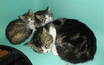 SEM 27 : SOS FOURRIERES RP 55 chats chatons // AVT LE 05.07.14-4194-bb.jpg