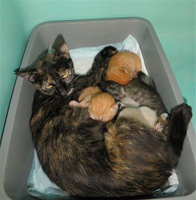 SEM 27 : SOS FOURRIERES RP 55 chats chatons // AVT LE 05.07.14-4203-bb.jpg