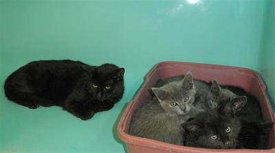 SEM 27 : SOS FOURRIERES RP 55 chats chatons // AVT LE 05.07.14-4213-bb.jpg