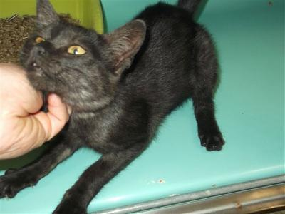 SEM 34 : SOS FOURRIERES RP  chats chatons // AVT LE 23.08.14-25013.jpg
