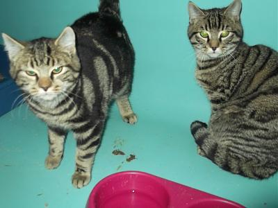 SEM 5 : SOS FOURRIERES RP CHATS CHATONS // AVT LE 31/01-2-chats.jpg