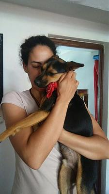 Sito adorable loulou actif 2 ans 7/8kgs attend sa famille (Grenade, Espagne)-13690714_1078276612265104_6494919329970524294_n.jpg