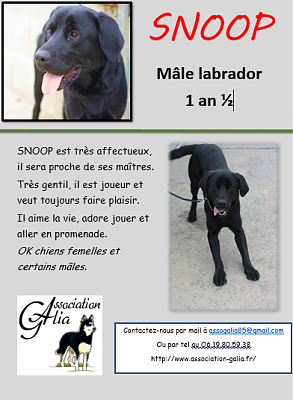 SNOOP labrador 1 an 1/2-snoop-affiche.png