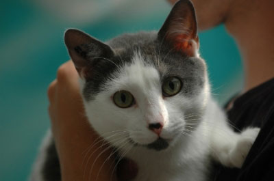 Nom : adopter-chat-Mercure-1.jpg Affichages : 299 Taille : 14,6 Ko