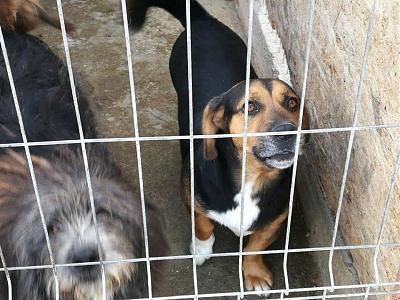 !!! SOS !!! RAOUL - MALE PETITE TAILLE/COURT SUR PATTES - 4 ANS - REFUGE ALINA-15179194_1857005154536920_6290722126166774301_n.jpg