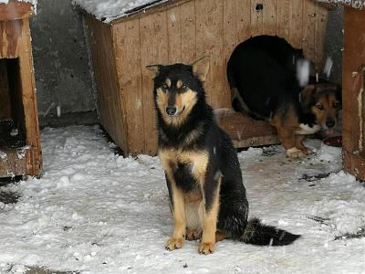 !!! SOS !!! RAOUL - MALE PETITE TAILLE/COURT SUR PATTES - 4 ANS - REFUGE ALINA-29595494_1704404576286615_341857086948752341_n.jpg