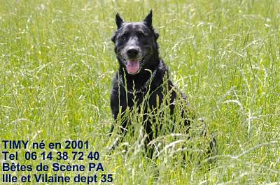 Timy, chien type beauceron (44)-timybeauceron12ans-27.jpg