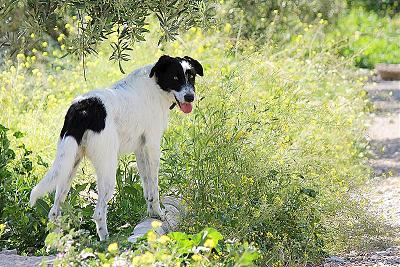 Tina 2 ans, 1 an de refuge, adorable louloute attend sa famille (Grenade, Espagne)-253219_563464900363145_1861255193_n.jpg