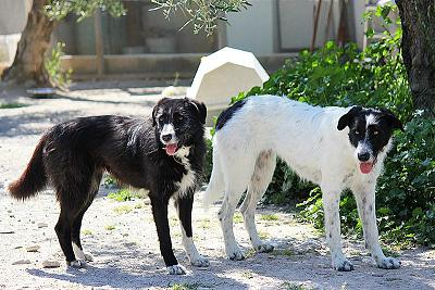 Tina 2 ans, 1 an de refuge, adorable louloute attend sa famille (Grenade, Espagne)-970193_563464937029808_908300293_n.jpg