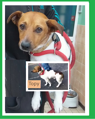Topy jack russel male 2 ans-topy.png